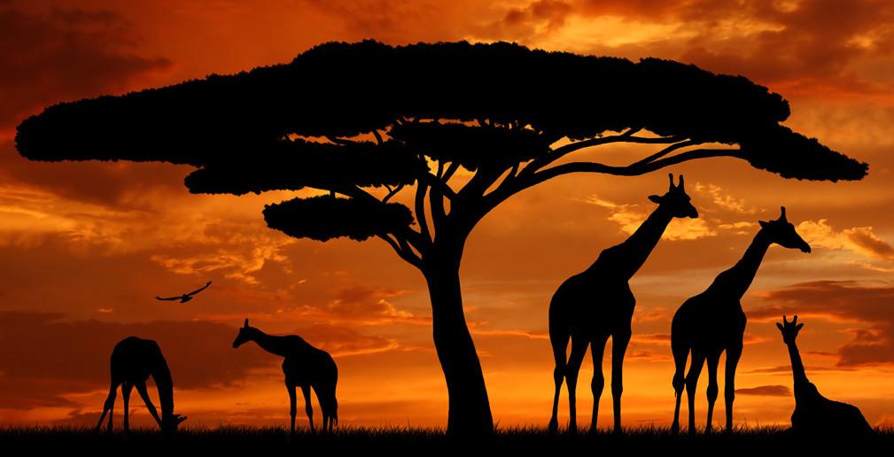 Geheimtipps : Afrika – Reiseziele